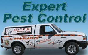 Expert Pest Control Services in Ventura County