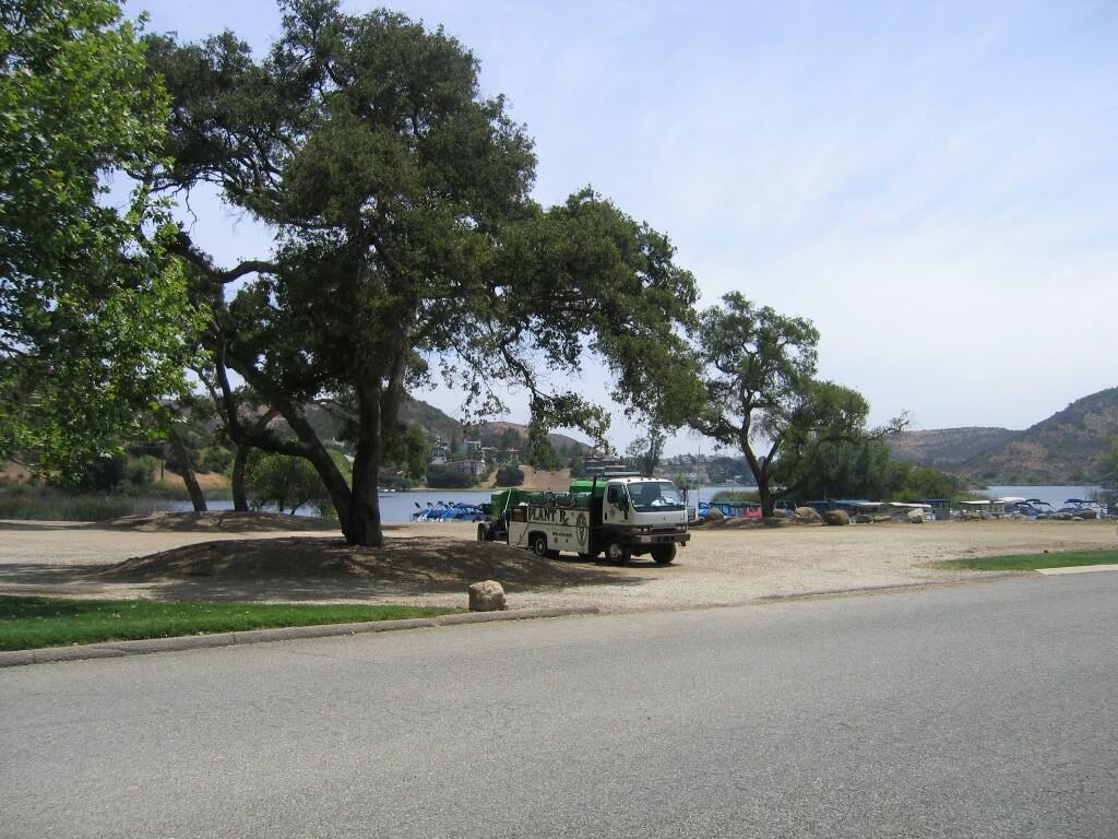 Oak Tree Kastle Kare Pest Control  Oak Moth Destruction. Landscape Problems   Kastle Kare Pest Control Services