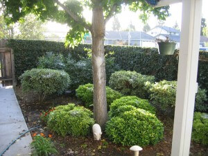 Trees, plants, shrubs, landscape pest control services, ventura county