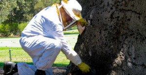 Bee and Wasp Control in Ventura County