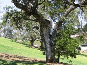 bee keeper in tree, exterminator, insects, trees, pest control