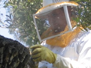 bee keeper, pest control, insects, plant disease, trees, camarillo