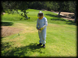 bee keeper clothing, insects, pest control, trees, pest, camarillo