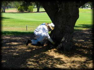 bee keeper at golf course, lawn, pest control, trees, plant disease