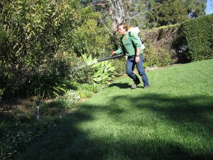 spraying trees, landscape, lawn, plant health, insects