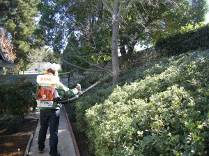 spraying plants, trees, landscape, insects, pest control, plant disease