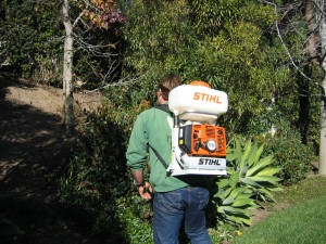 ty spraying plants, plant disease, pest control, plant health, shrubs