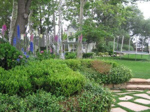 trees, shrubs, insects, pest control, landscape, santa barbara