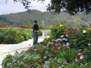 spraying flowers, shrubs, landscape, plant health, pest control