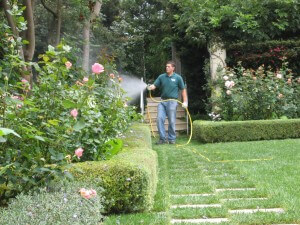 spraying shrubs, lawn, weeds, insects, pest control