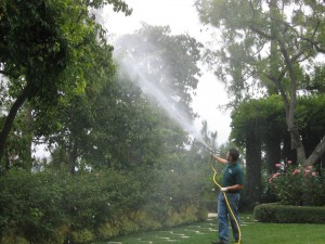 spraying trees, plant disease, landscape, dying tree, pest