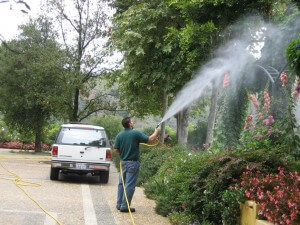 spraying tree, plant health, plant disease, pest control, ventura county
