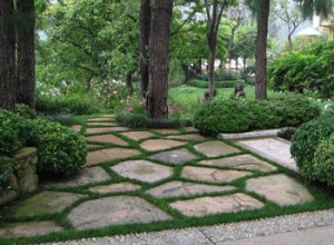 mansion, flagstone, trees, plant health, plant disease, landscape