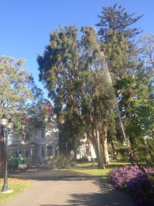 disease treatment for trees