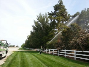 Servicing Trees & Shrubs for Optimal Plant Health