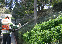 plant spray backpack, trees, landscape, plant disease, camarillo