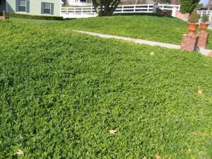 apple tree, spraying, plant health, lawn, landscape, camarillo