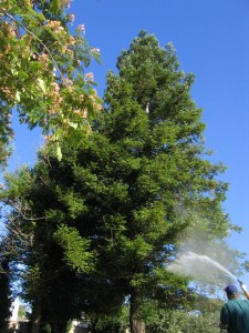 pest control, exterminator, plant disease, dying trees