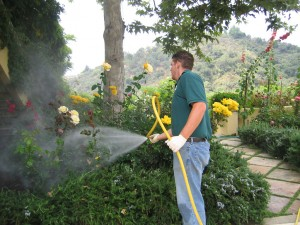 malibu, pest control, plant, pests, plant diseases, insects, exterminator