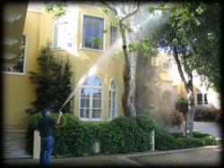 spraying tree, yellow house, plant disease, dying tree, pest control
