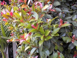 plant health, plant disease, insects, shrubs, pest control
