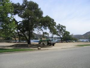 Oak Tree Kastle Kare Pest Control, Oak Moth Destruction