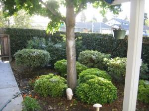 Trees, plants, shrubs, landscape pest control services, ventura county
