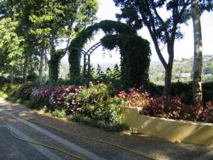 landscape, arches, trees, pest control, plant disease, santa barbara