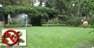 Landscape Pest and Disease Control in Ventura County
