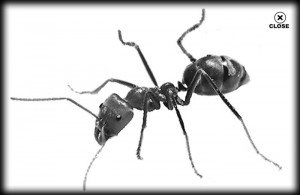 ant, landscape, trees, pest control, pest, lawn, santa barbara
