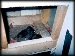 baby opossums, rodent, exterminator, pest control, malibu
