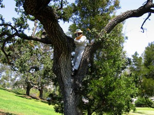 bee keeper in oak tree, insects, exterminator, pest control, camarillo