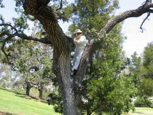 Bee & Wasp Catcher, Pest Control, Camarillo, CA