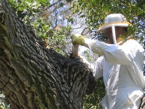 bee keeper spraying bees, tree, insects, pest control