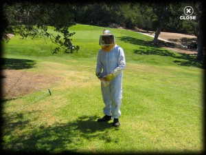 bee control clothing, lawn, pest control, insects, pest, santa barbara