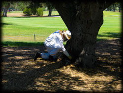 bee keeper, trees, insects, pest control, pest, exterminator