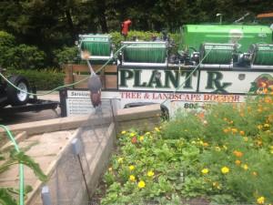 Plant RX