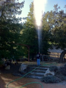 50 foot tree sprayer