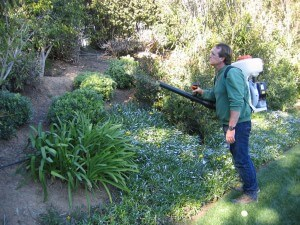 spraying landscape, plant disease, pest control, insects