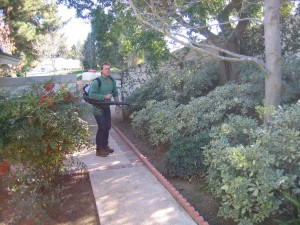 spraying shrubs, landscape, plant disease, pest control