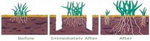 lawn aeration, weeds, plants, landscape, pest control, gopher