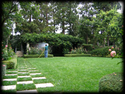 healthy lawn, landscape, plant disease, insects, pest control