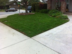 after lawn treatment