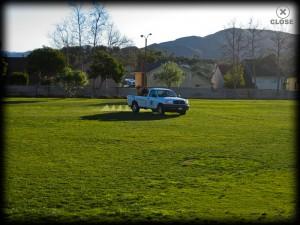 spraying lawn, weeds, landscape, trees, camarillo, ventura county