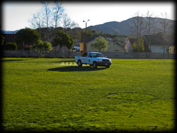 truck spraying lawn, weeds, plant disease, trees, pest control