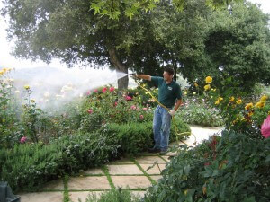 spraying flowers, shrubs, lawn, landscape, pest control, insects