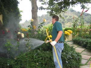 spraying shrubs, flowers, landscape, insects, pest control,