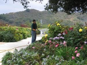 spraying flowers, shrubs, landscape, plant health, pest control