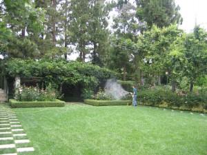 spraying trees, spraying lawn, plant disease, weeds, ventura county