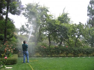 spraying trees, plant health, plant disease, insects, pests